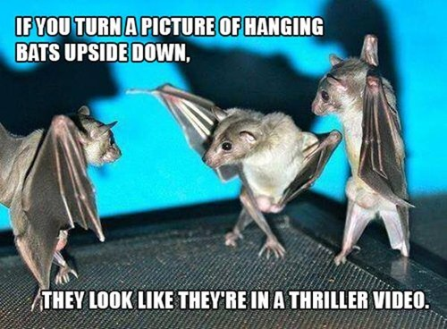 bats amazing thriller funny - 7796240384