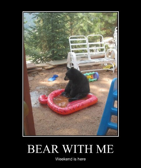 wtf,playtime,bear,funny
