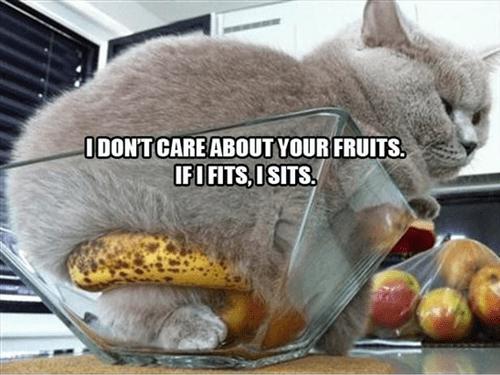 banana cute sits bowl Cats - 7797164288