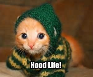 cat kitten cute hoodie - 7797209600