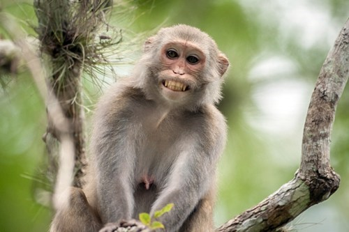monkeys bad news florida herpes