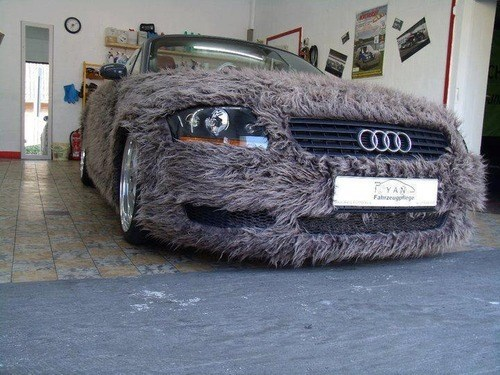 fur wtf cars funny - 7797703168
