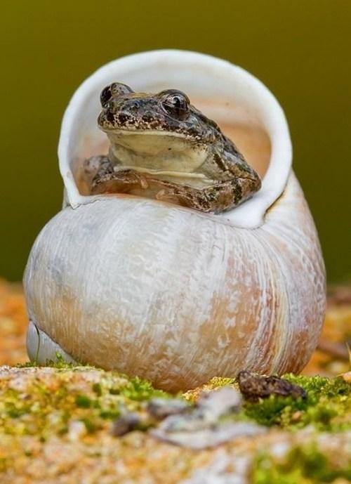 cute shell snail frog - 7797736448