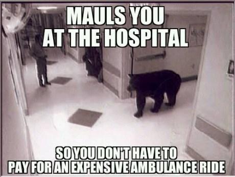bears,hospitals