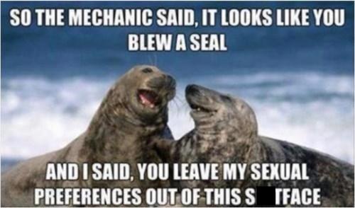 seals puns funny - 7797868544