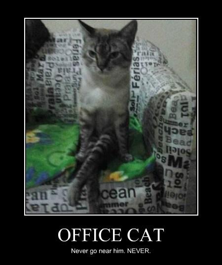 Office Cat Lolcats Lol Cat Memes Funny Cats Funny Cat