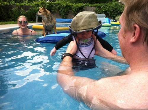 Babies photobomb dogs swimming funny chihuahua - 7798705920