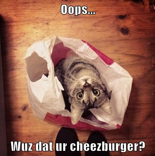 Cheezburger Image 7798934272