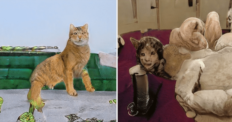 Creepy cat pics from ThisCatDoesNotExist, AI generated cat pictures, funny, weird, cursed images.