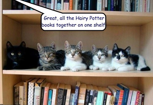 Great, all the Hairy Potter books together on one shelf.