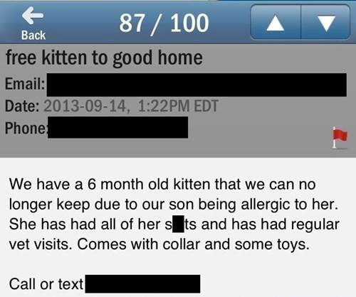 craigslist,autocorrect,kitten,funny