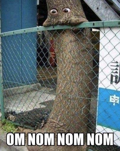 trees,om nom nom