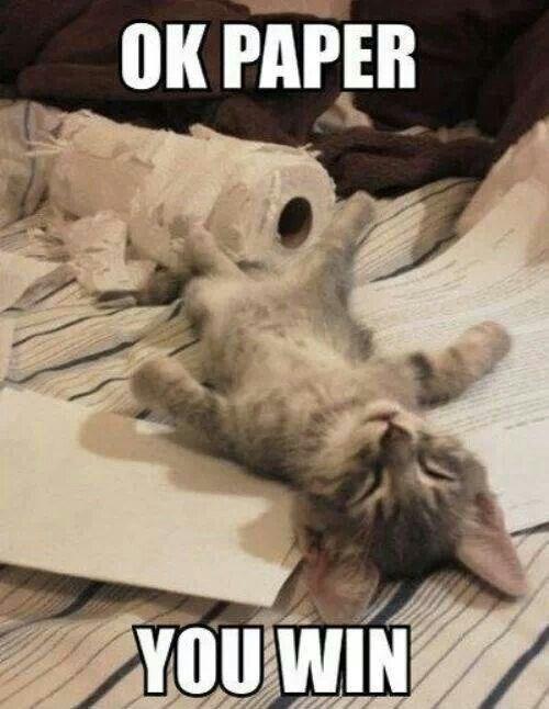 cat roll tired cute paper