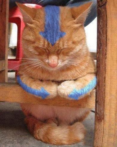cute airbender cartoons Avatar Cats - 7802406656