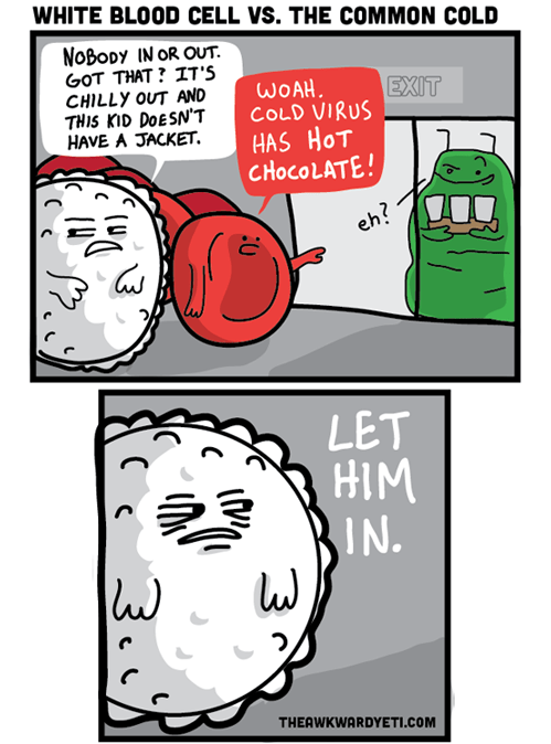 immune system cold virus blood cells funny web comics - 7802435584