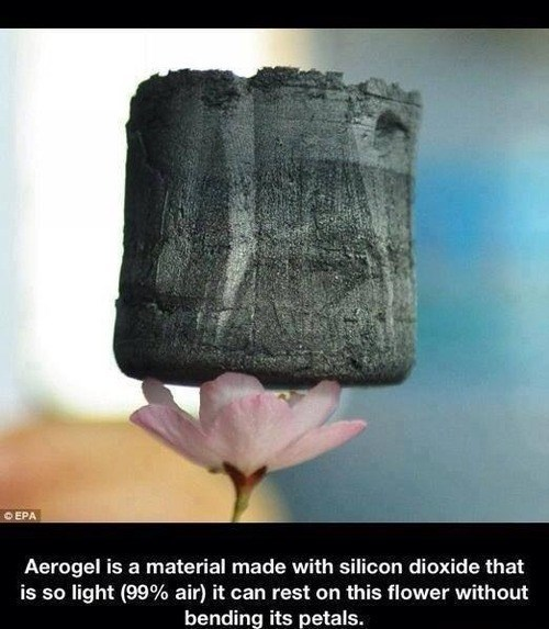 technology,Flower,science,aerogel,funny