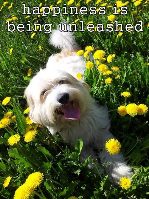 unleashed dogs happiness - 7802828800