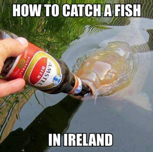 beer Ireland fish