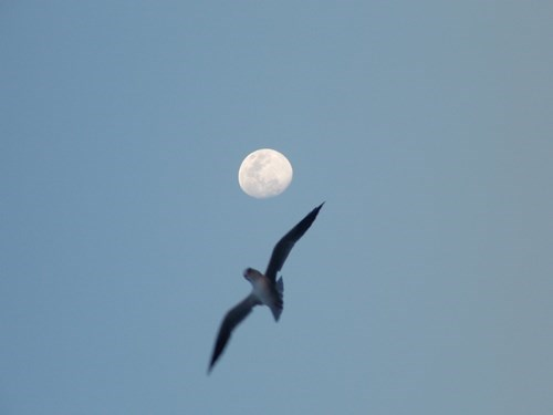 photobomb birds moon funny - 7803643392