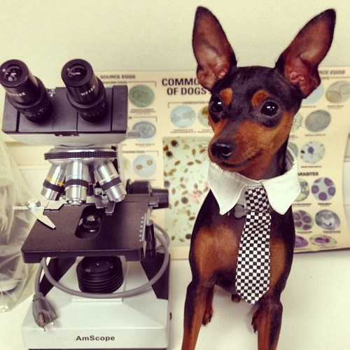 dogs microscope science funny - 7804067072