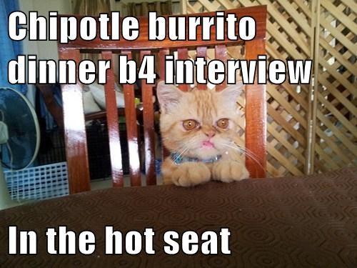 cat barrito funny - 7804254464