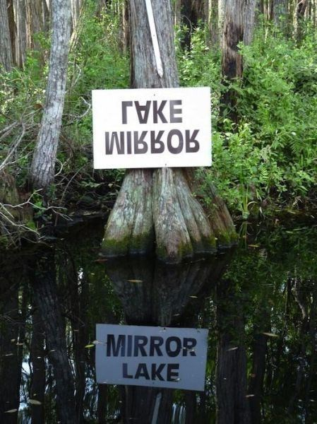 sign,design,reflection,funny