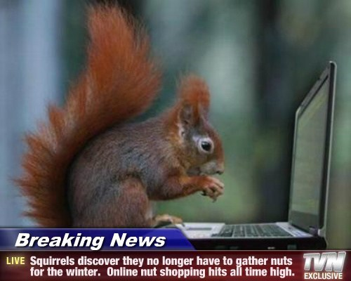 squirrel online shopping nuts - 7804689920