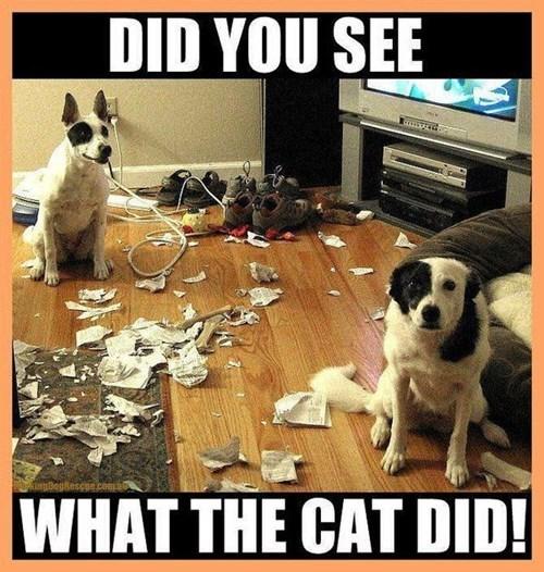 cat blame mess - 7804708096