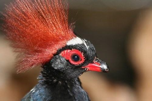 hair FAIL meme bird funny - 7805915392