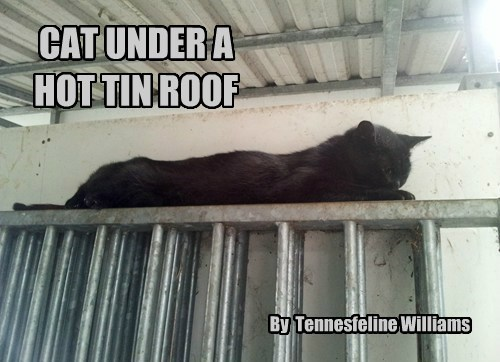 CAT UNDER A HOT TIN ROOF By Tennesfeline Williams