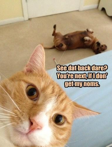 cat lolspeak noms dogs funny - 7806014464