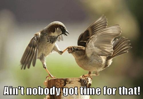 pun bird sweet brown funny - 7806231296