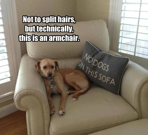signs sofa dogs funny - 7806482432