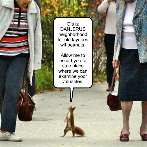 squirrel,cute,scam,funny