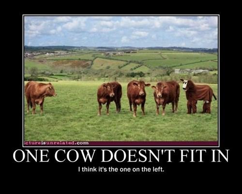 cow suit,wtf,cow,pun,outcast,funny