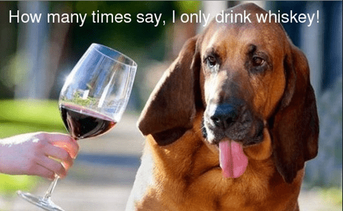 whiskey crunk critters wine snob dogs funny - 7806707968