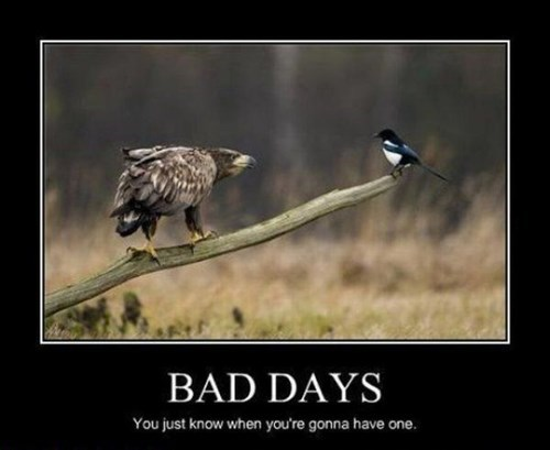 birds bad day funny animals - 7807100672
