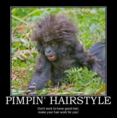 hair style monkey funny animals - 7807102208