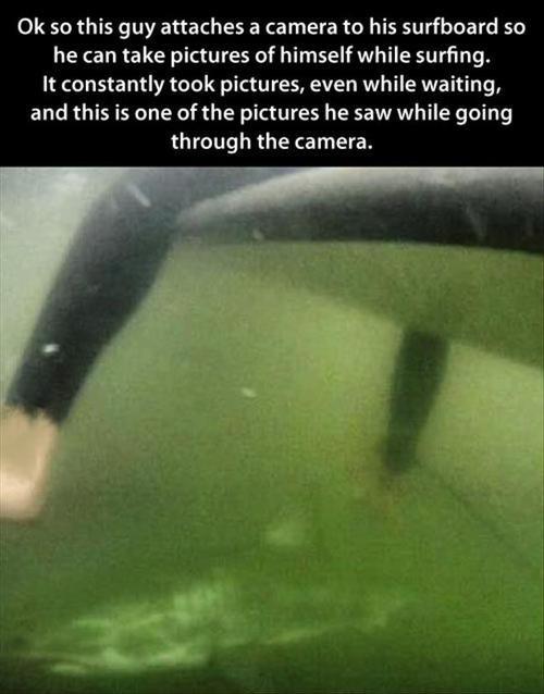 sharks surfing animals - 7807250176