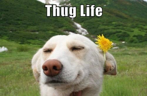 dogs,Flower,thug,funny