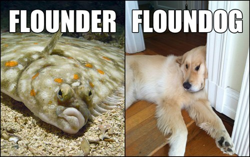 dogs,fish,flounder,flip