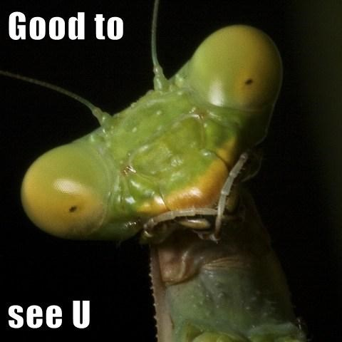 bug mantis sight - 7808289024