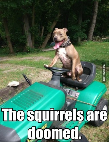 dogs tractor squirrels nuts