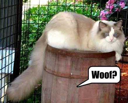 dogs hidden barrel - 7808875776