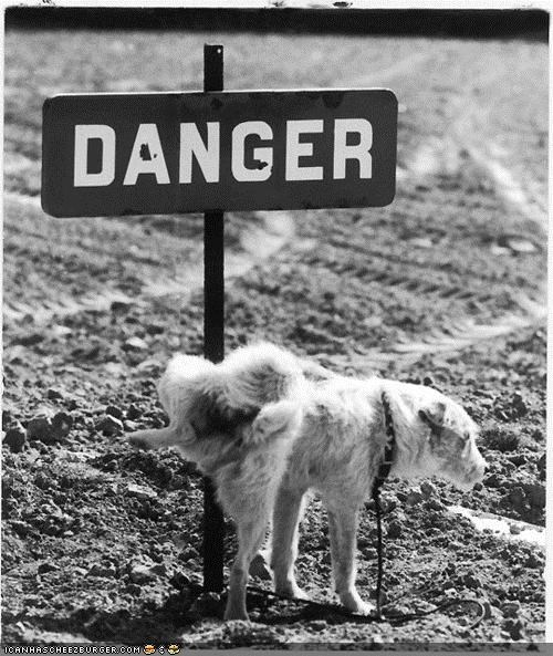 dogs,brave,danger,laugh