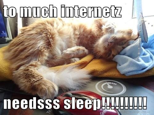 cat,internet,sleep