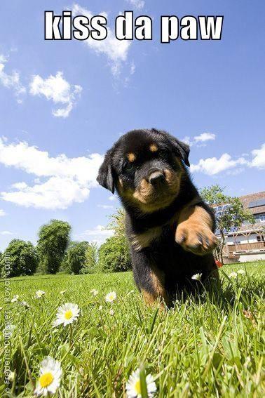 puppy KISS cute - 7809673728