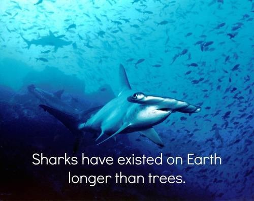 trees sharks science funny - 7809856000