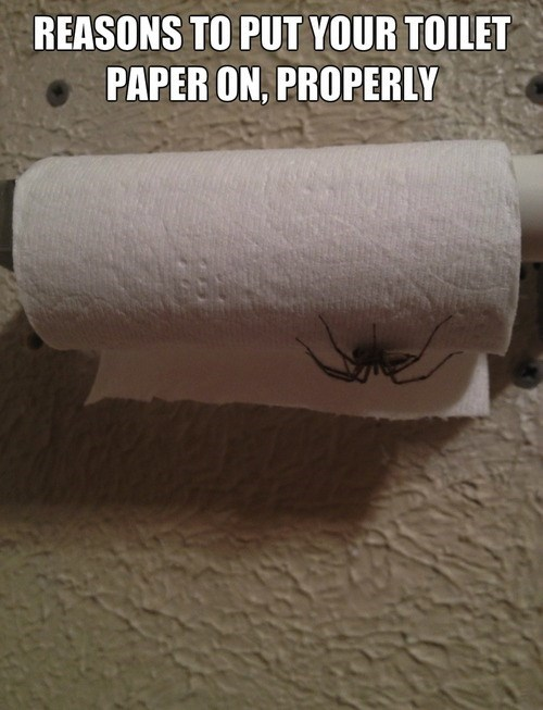 spiders nope toilet paper - 7809904384