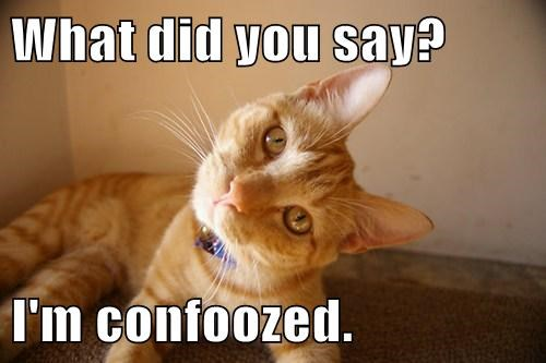 cat lolspeak confused - 7809943552